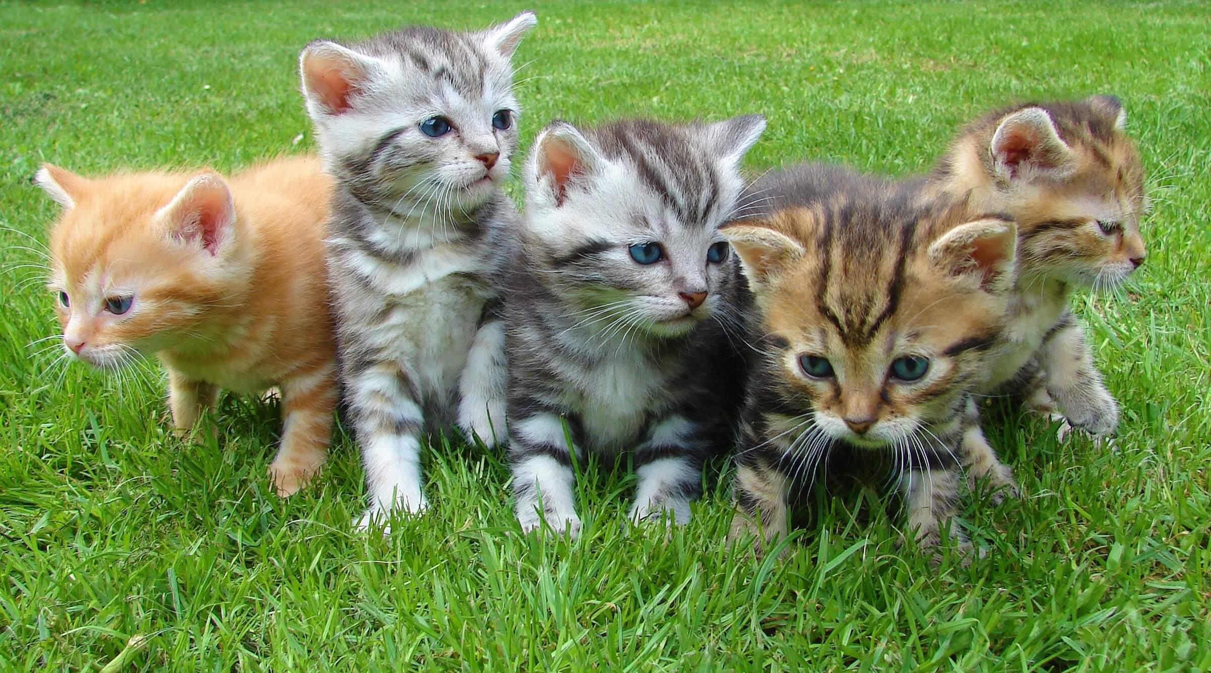 Bloomington Cat Care